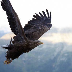 HF Pest & Bird Control Background
